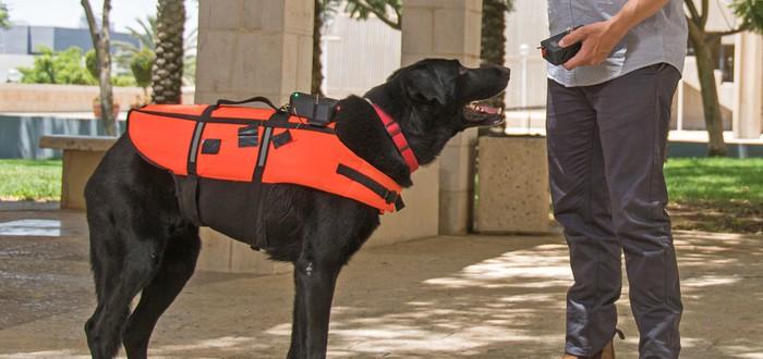 Собаки с дистанционным управлением стали реальностью благодаря тактильному жилету