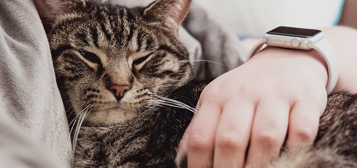 Исследование: Кошки привязываются к хозяевам не меньше, чем собаки