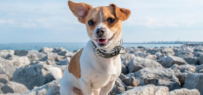 Исследование: наличие собаки снижает риск смерти от сердечных проблем