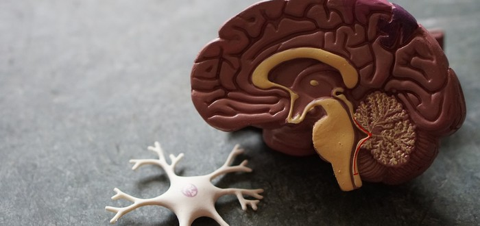 Ученые обеспокоены, что искусственно выращенный человеческий мозг может быть разумным