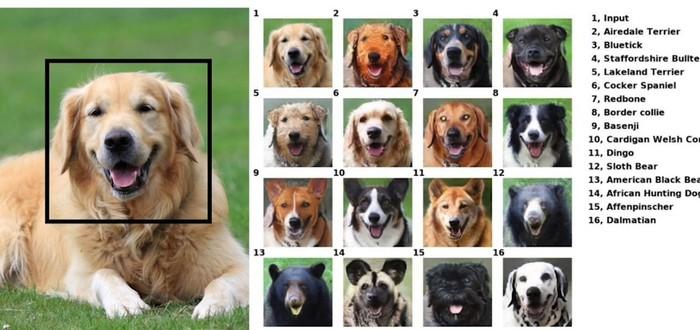 ИИ от Nvidia помогает животным улыбаться на фото