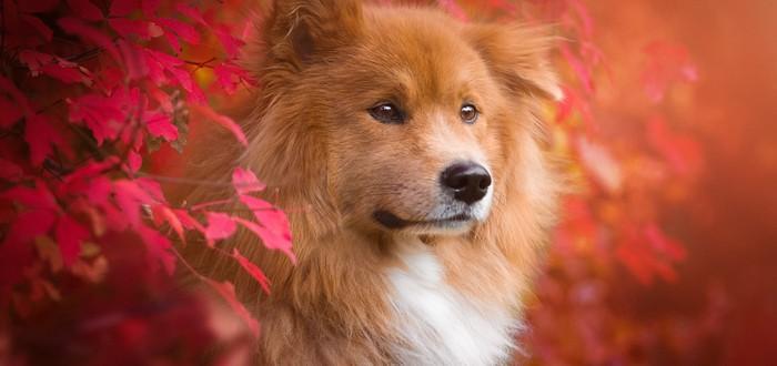 Исследование: Собаки становятся несчастными, если на них кричать при обучении