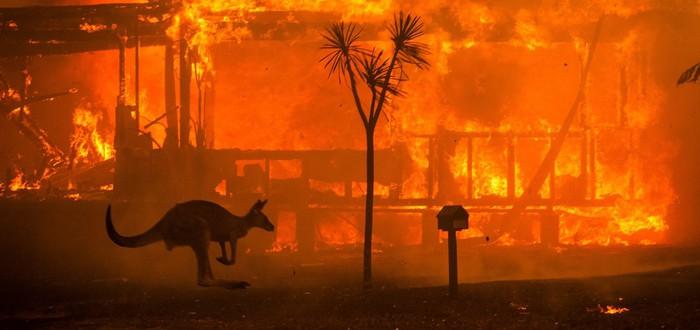 В Австралии настоящий апокалипсис — бушуют лесные пожары