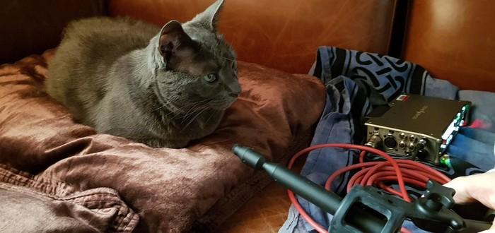 Разработчики записывали своих котов для Sea of Thieves