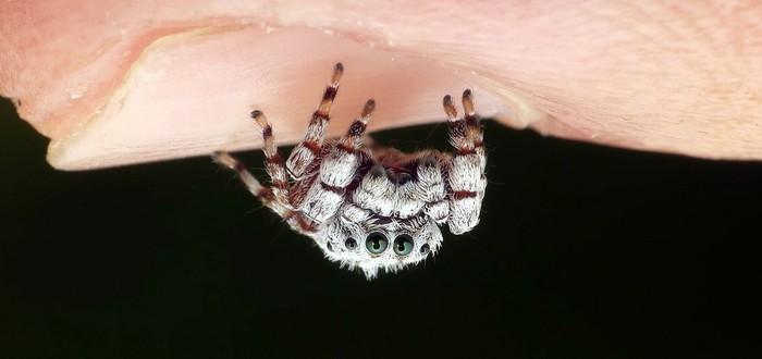 В Австралии запустили приложение Critterpedia — это аналог Shazam для пауков и змей