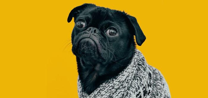 Исследование: Собаки тоже испытывают кризис среднего возраста