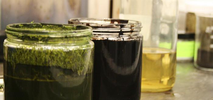 Ученые создали сырую нефть из водорослей всего за 60 минут