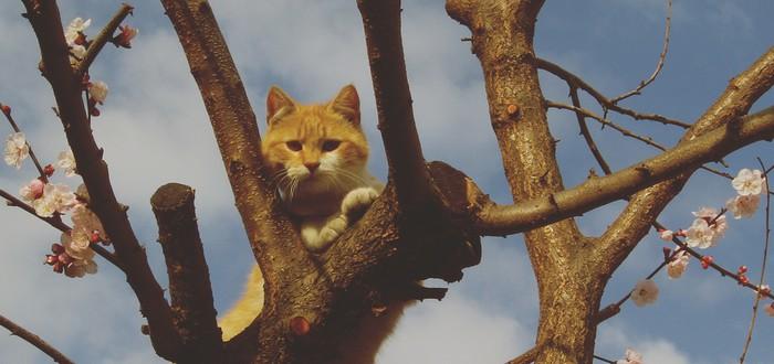 Домашние джунгли для кошки