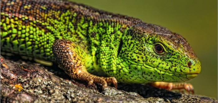 Один из хаккеров Lizard Squad вышел на связь