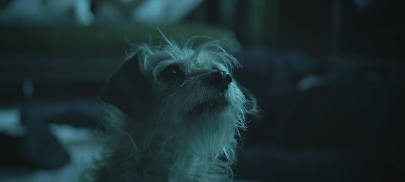 Собака Джона Уика стреляет не хуже хозяина