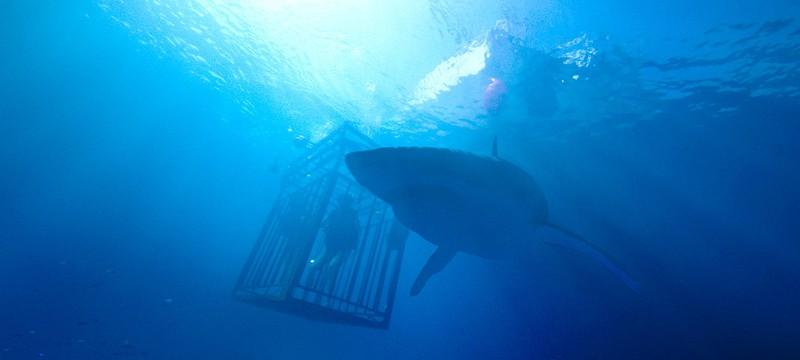 "Трейлер акульего хоррора ""Синяя бездна"""