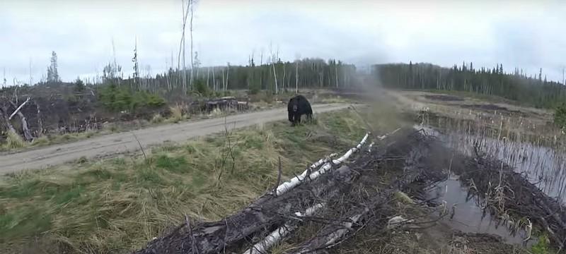 Вот что видит жертва нападения черного медведя — запись от первого лица