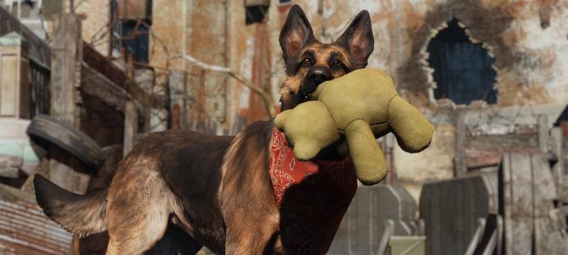 В Fallout 76 нельзя заводить собаку