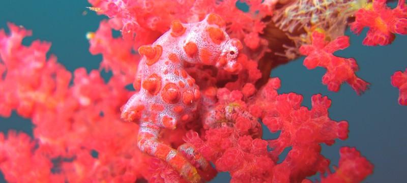 Pantone назвала цвет 2019 года — коралловый