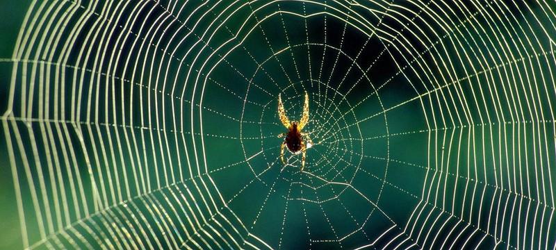 Учёные не рекомендуют убивать пауков, обнаруженных дома