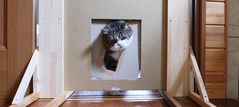 Ютуб-канал ответил на важный вопрос — если голова кошки проходит, то пролезет ли все тело
