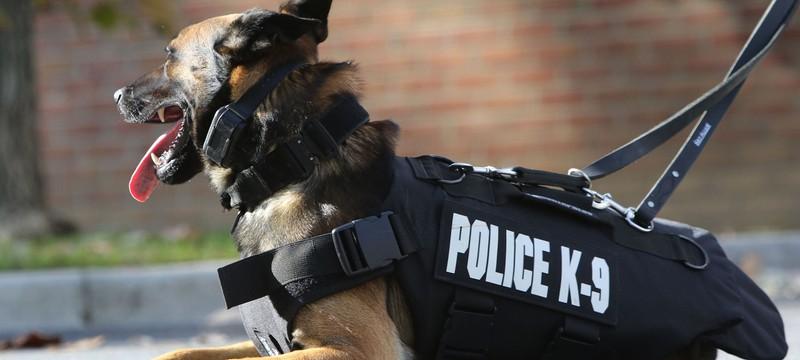 Разработчик Rainbow Six Siege про оперативника с питомцем: Вы готовы убивать собаку?