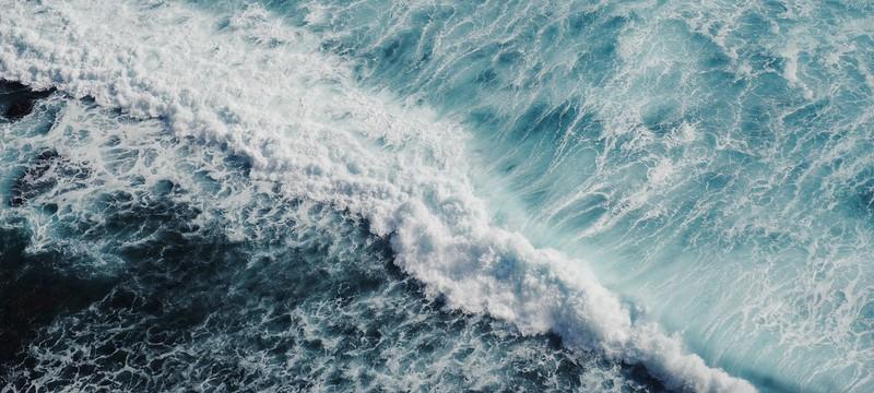 Исследование: Падение уровня кислорода в океанах приведет к вымиранию рыб
