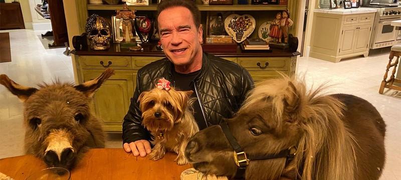 Арнольд Шварценеггер сидит дома с ламой и осликом — советует и вам не выходить