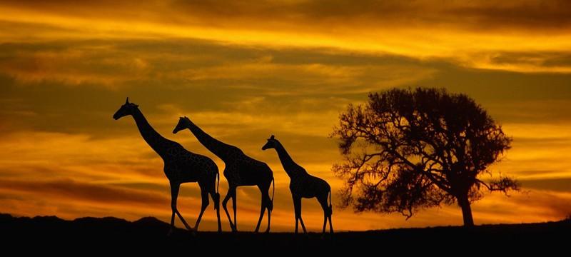 На Twitch появился канал про сафари в Африке