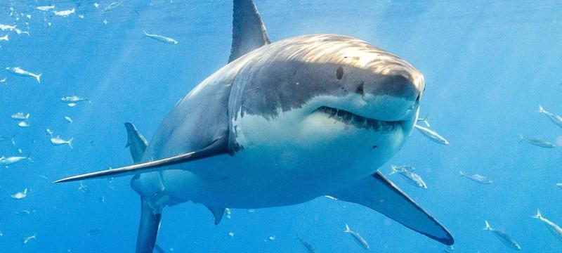 """Акулы-убийцы в трейлере хоррора """"Глубокое синее море 3"""""""