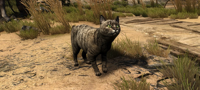 Улучшенные текстуры котиков, лошадей и пантер — для The Witcher 3 вышел новый мод