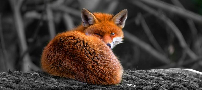 Firefox потерял 46 миллионов пользователей за три года