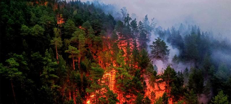 Дым от лесных пожаров в Сибири достиг северного Полюса — впервые за историю наблюдений