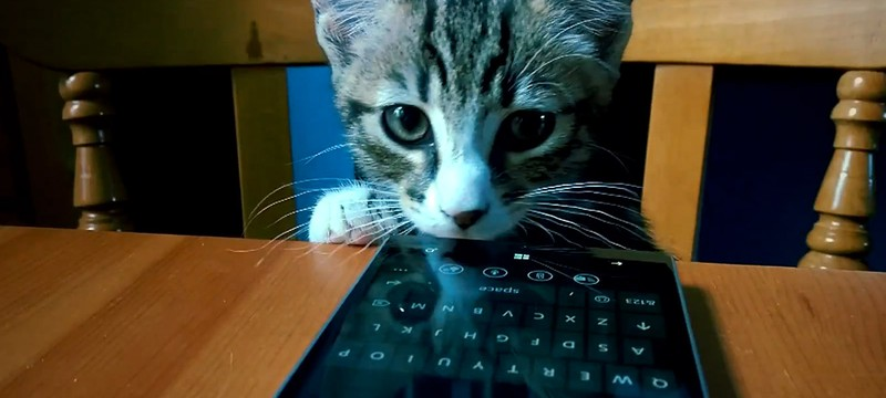 Microsoft рекламирует Lumia 930 при помощи котов