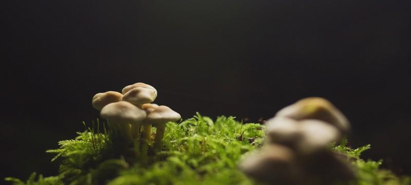 Short: волшебный лес