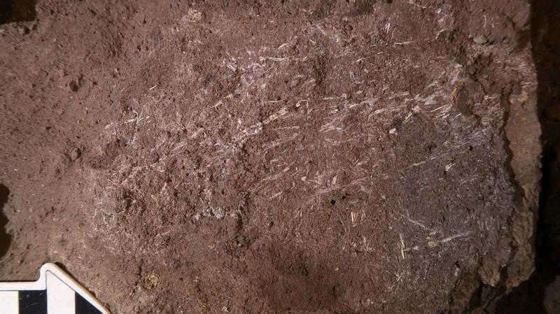 Ученые нашли 200000-летнюю человеческую кровать, сделанную из травы и пепла