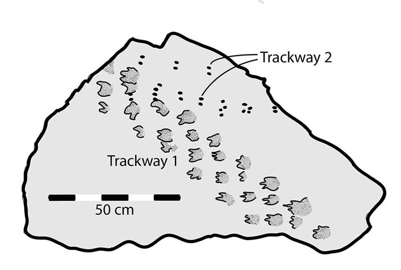 В Большом Каньоне обнаружили следы возрастом 314 миллионов лет